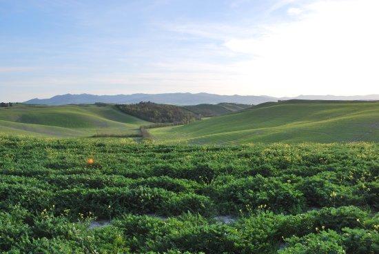 Печчоли, Италия: la campagna coltivata