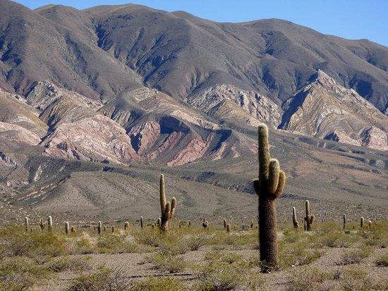 Parque Nacional Los Cardones: Los Cardones
