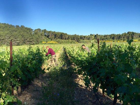 Saint-Nazaire-d'Aude, Francia: Nos vignes