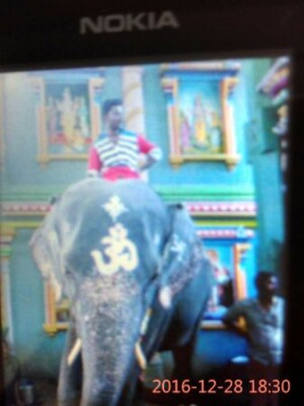 Arulmigu Manakula Vinayagar Temple: Holy Elephant of the Temple main attraction of tourists !