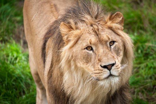 Antwerp Zoo (Dierentuin) Photo