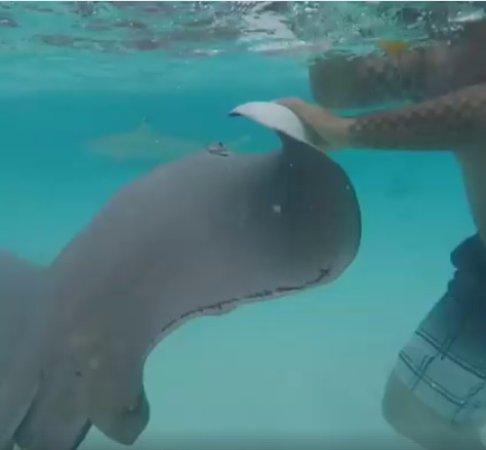 Papetoai, French Polynesia: Jet Ski tour, swimming with Black tip sharks and Stingrays