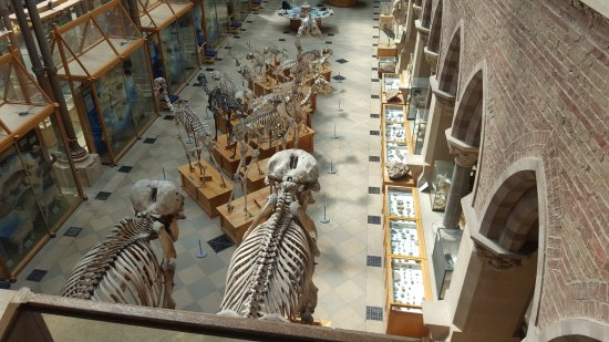 Oxford University Museum Of Natural History Parking