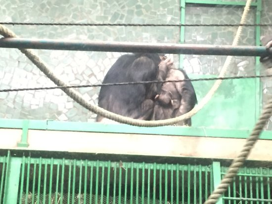Nikolaev Zoo: photo5.jpg