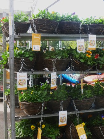 Brookside Garden Centre U0026 Miniature Railway: £6 Hanging Baskets .