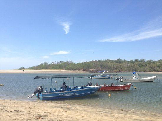 Estuary Tour by Boat in Playa Grande National Park