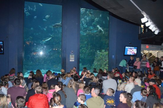 North Carolina Aquarium At Fort Fisher Nc Gathering For The