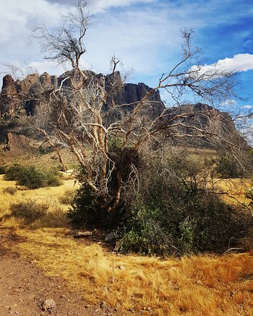 Lost Dutchman State Park: View