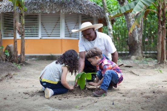 El Sendero del Cacao: Siembra