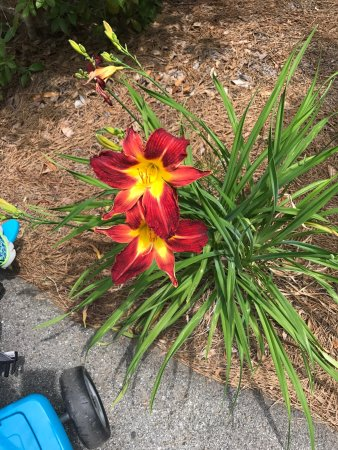 Loganville, GA: VINES Botanical Gardens