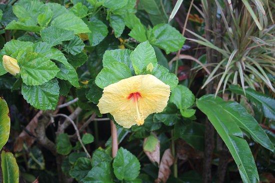 Pineapple Inn: flowers in the tropical gardens