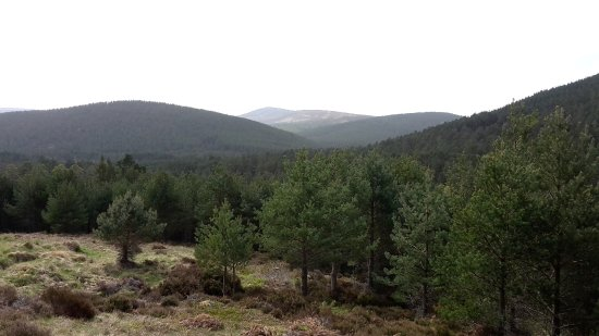 Badenoch and Strathspey, UK: Cairngorms Nat Park 9