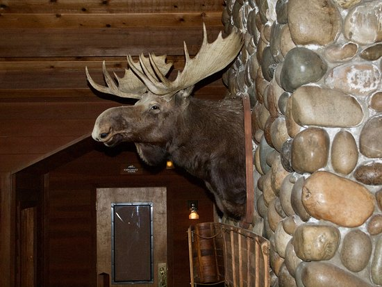 Sunnyside Restaurant and Lodge: Greetings By A Moose