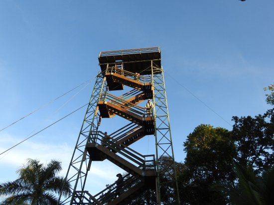 Tranquilo Bay Eco Adventure Lodge: Birding tower on the grounds