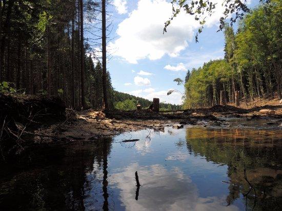 Erezee, Belgique : Laid Loiseau, rivulet flooding, tree cutting landscape, June 2014