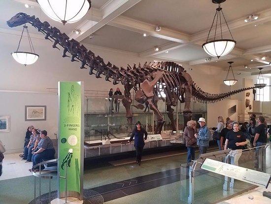 massageklinik københavn natural history museum kbh