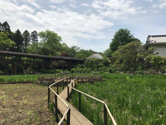 Hondo-ji Temple: photo3.jpg
