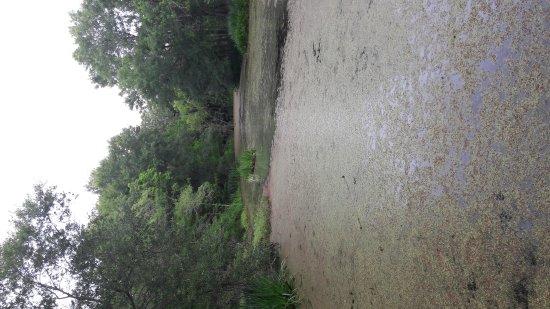Pasadena, TX: Armand Bayou Nature Center