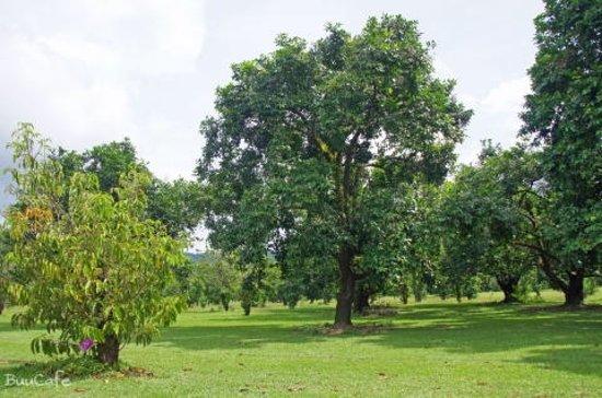 Diwan, Australia: 庭の風景3