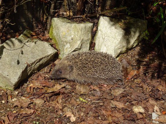 Woodlyn Park: We found a hedgehog out the front which was cool.