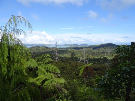 Coromandel, New Zealand: Beautiful view at the top