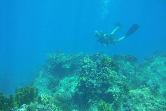 Atlantis Plongée Guadeloupe : Great dive a cousteau reserve. Great dive masters