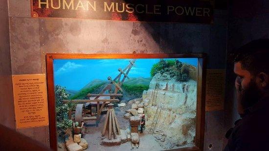 animal power display - picture of visvesvaraya industrial and, Muscles