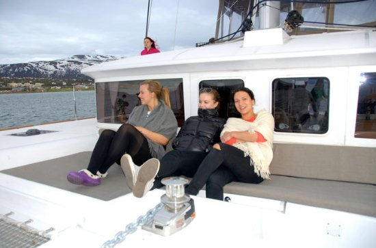 Fjord Cruise with Luxury Catamaran in...