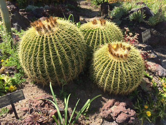 The Huntington Desert Garden: Desert Garden In Bloom