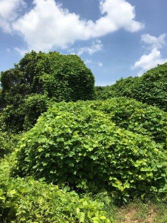 Lemon Tree Vembanad Lake Resort: photo9.jpg
