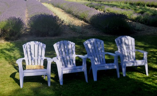 Sequim, WA: these chairs are waiting for you ...be sure to buy some ice cream to enjoy while sitting here