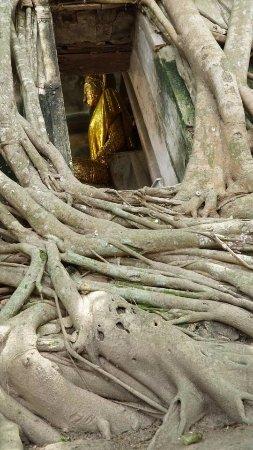 Bang Khonthi, Thaïlande : Buddha in the tree house