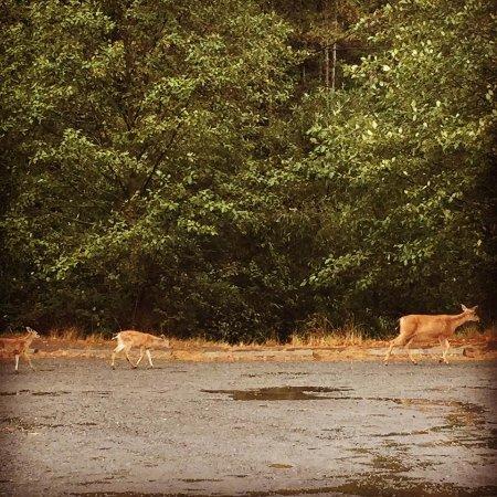 Nanaimo, Kanada: 鹿の親子にも遭遇!