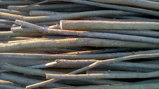 Craignure, UK: Four year old willow rods for the stool