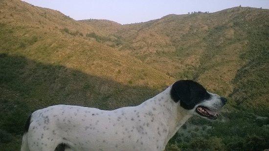 Mesudiye, Turquía: Hills just behind the lodges