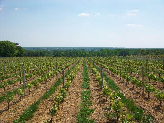 นอยเซย์, ฝรั่งเศส: Les vignes du Domaine Thierry Cosme