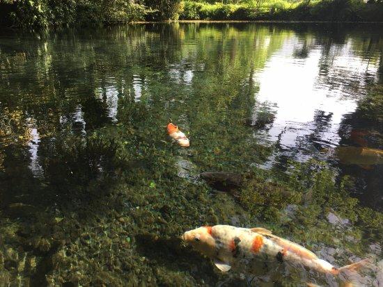 Myojin Pond Meisui Park