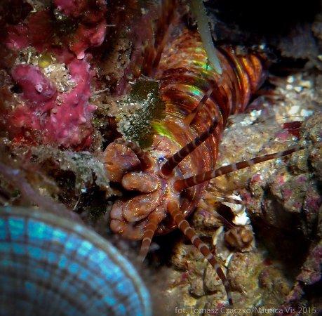Island of Vis, Croatia: different invertebrates