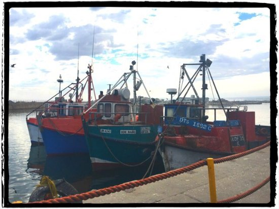 Lamberts Bay, South Africa: photo0.jpg