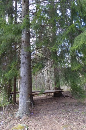 Lohja, Suomi: Resting place under the spruces
