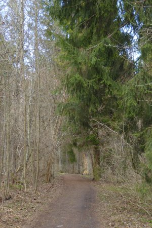 Lohja, Suomi: Nature trail in Liessaari (The deciduous trees are still bare after the winter)