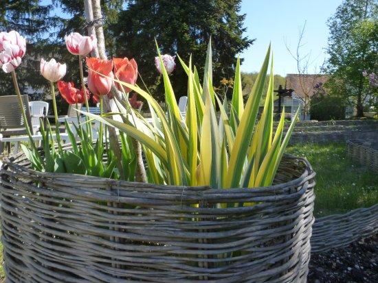 Monthou-sur-Cher, Francia: Les tulipes du printemps