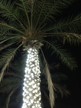 Makani Cafe: Palms with lights.