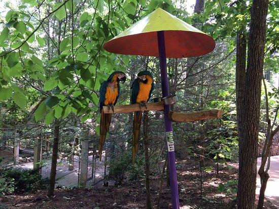 Perfect Parrot Mountain U0026 Gardens: Parrots On A Perch