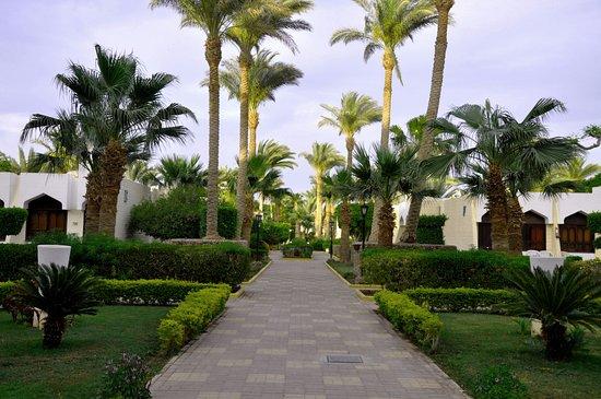 Pool - Picture of ZYA Regina Resort and Aqua Park Hurghada - Tripadvisor