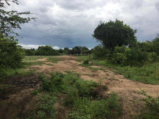 Kasese, Uganda: photo9.jpg