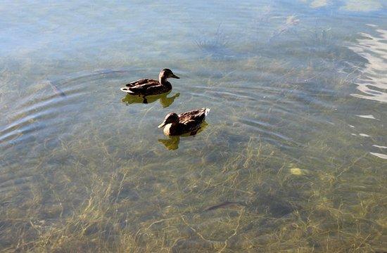 Dedinky, Eslovaquia: Duck