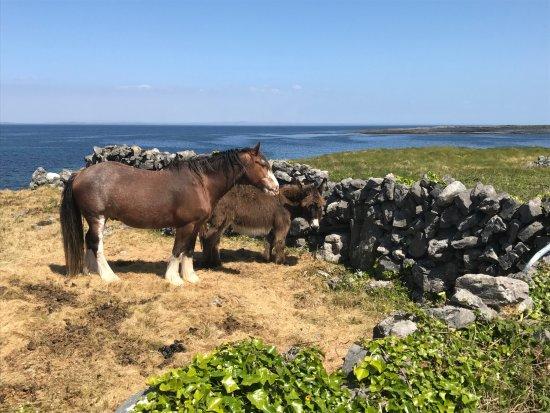 Inishmore Islands Tour Bike