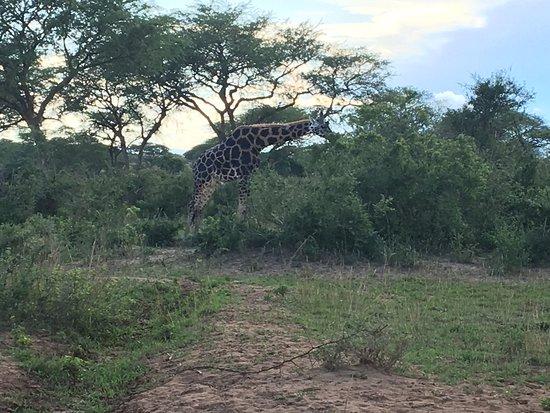 Murchison Falls National Park, Uganda: photo9.jpg