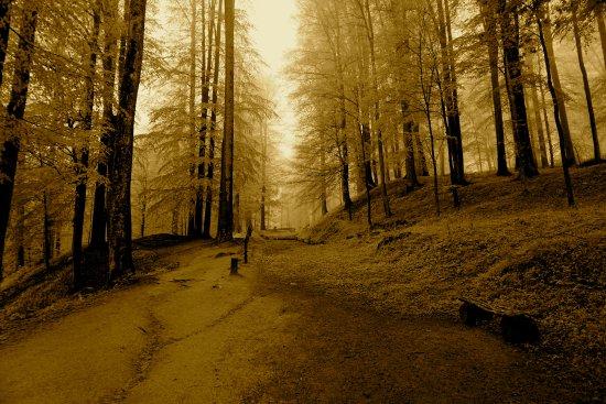 Sarmizegetusa, Romania: forest